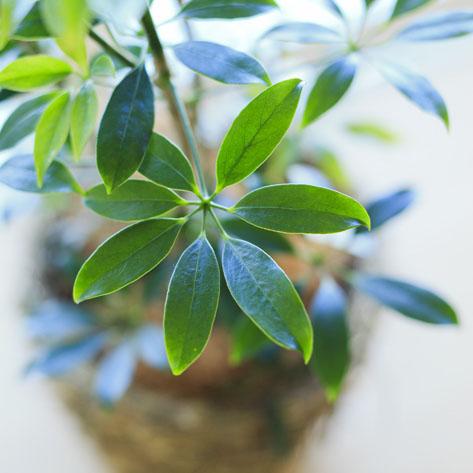 total plants bloom